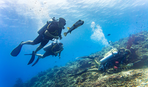 diving_dreamstime_xs_74594110
